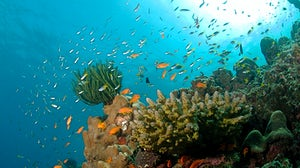 An Andaman Islands coral reef. Wikimedia Commons
