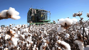 Cotton production. Bloomberg.