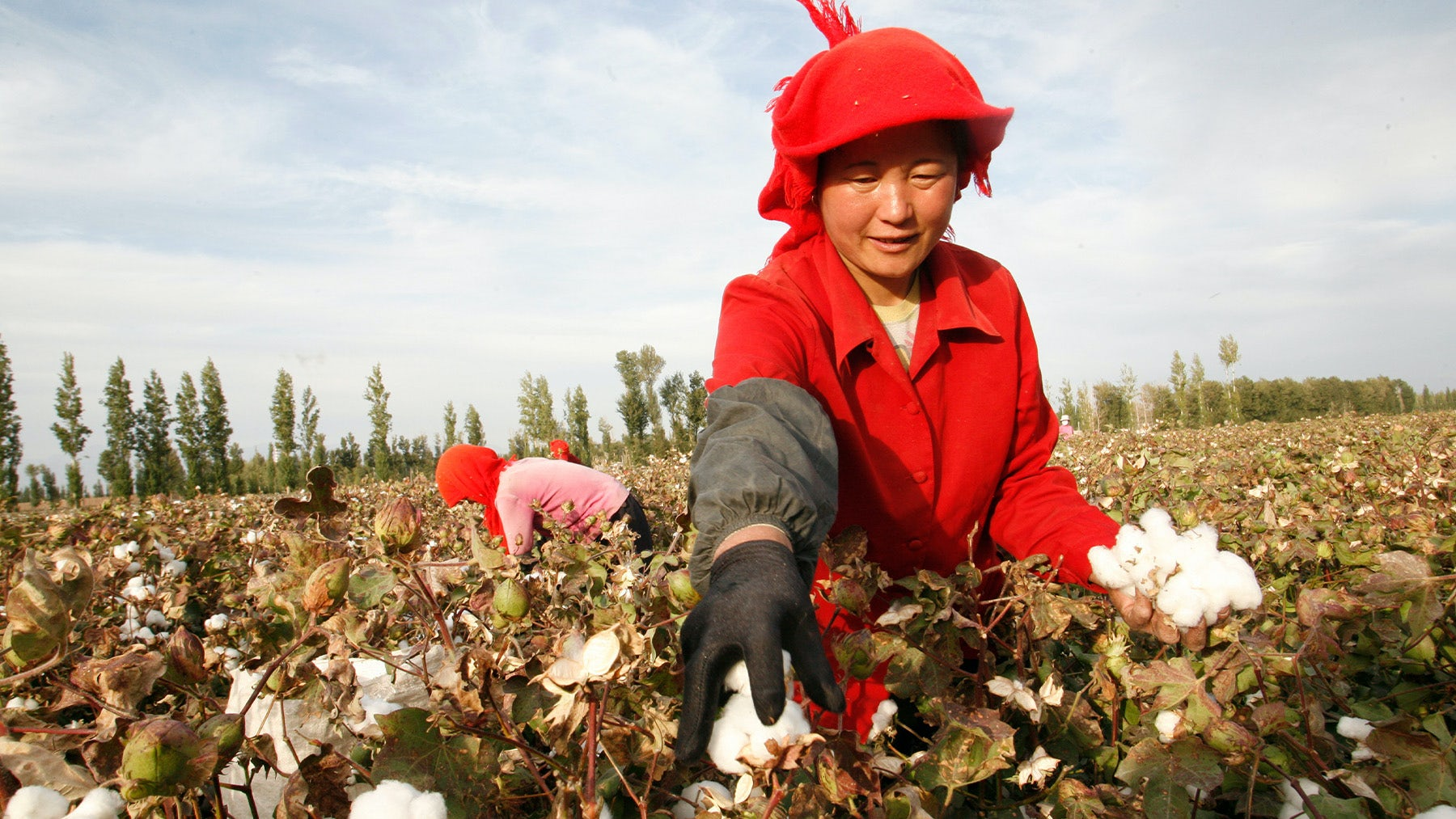 A farmer picks cotton on a farm on the outskirts of Hami, Xinjiang Region. Getty Images.