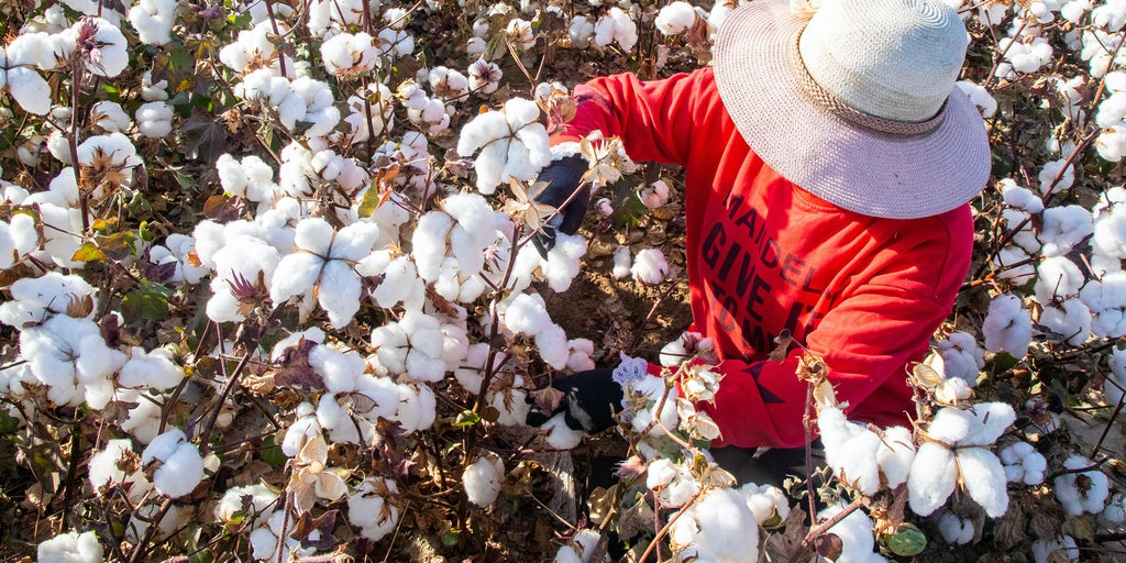 Indian Cotton Boosted by Xinjiang Sanctions