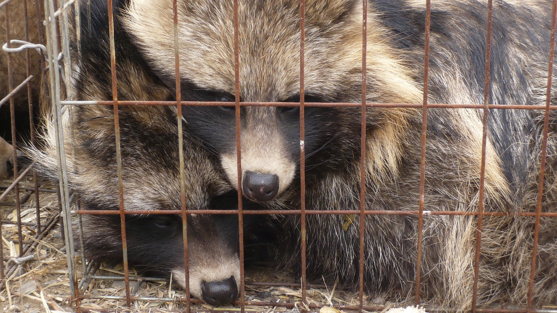 Op-Ed | Real Fur Is Out of Fashion
