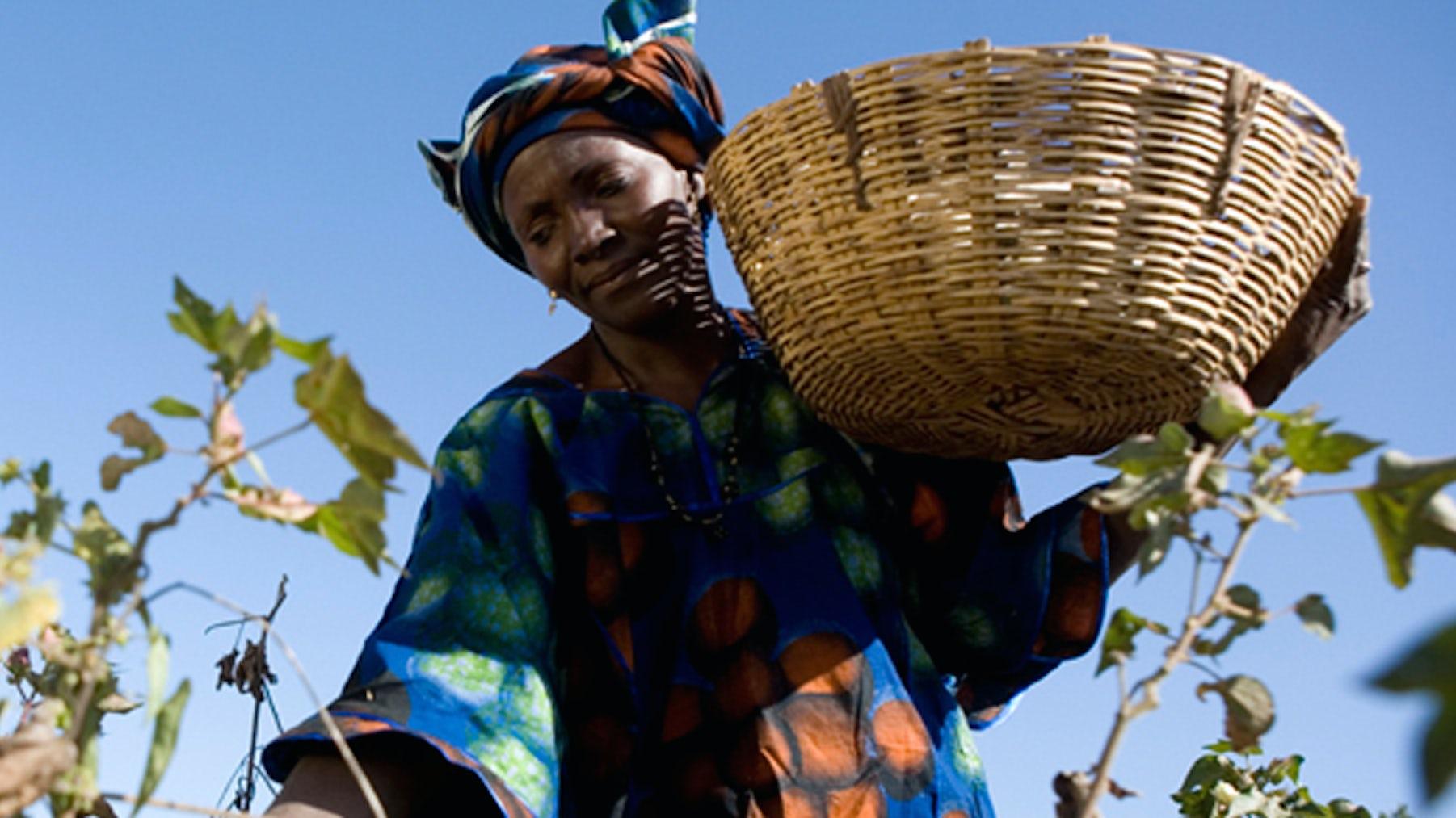 A Fair Trade Cotton Farmer   Source: Fair Trade