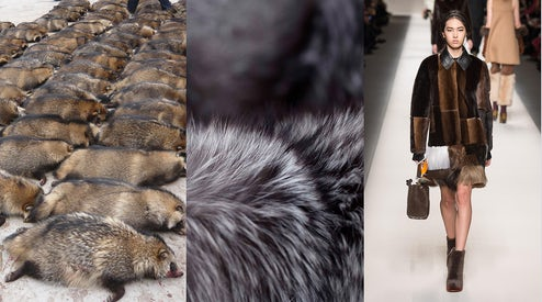 1f39906c390 Raccoon dogs at a fur farm, fur, Fendi Autumn/Winter 2015   Source