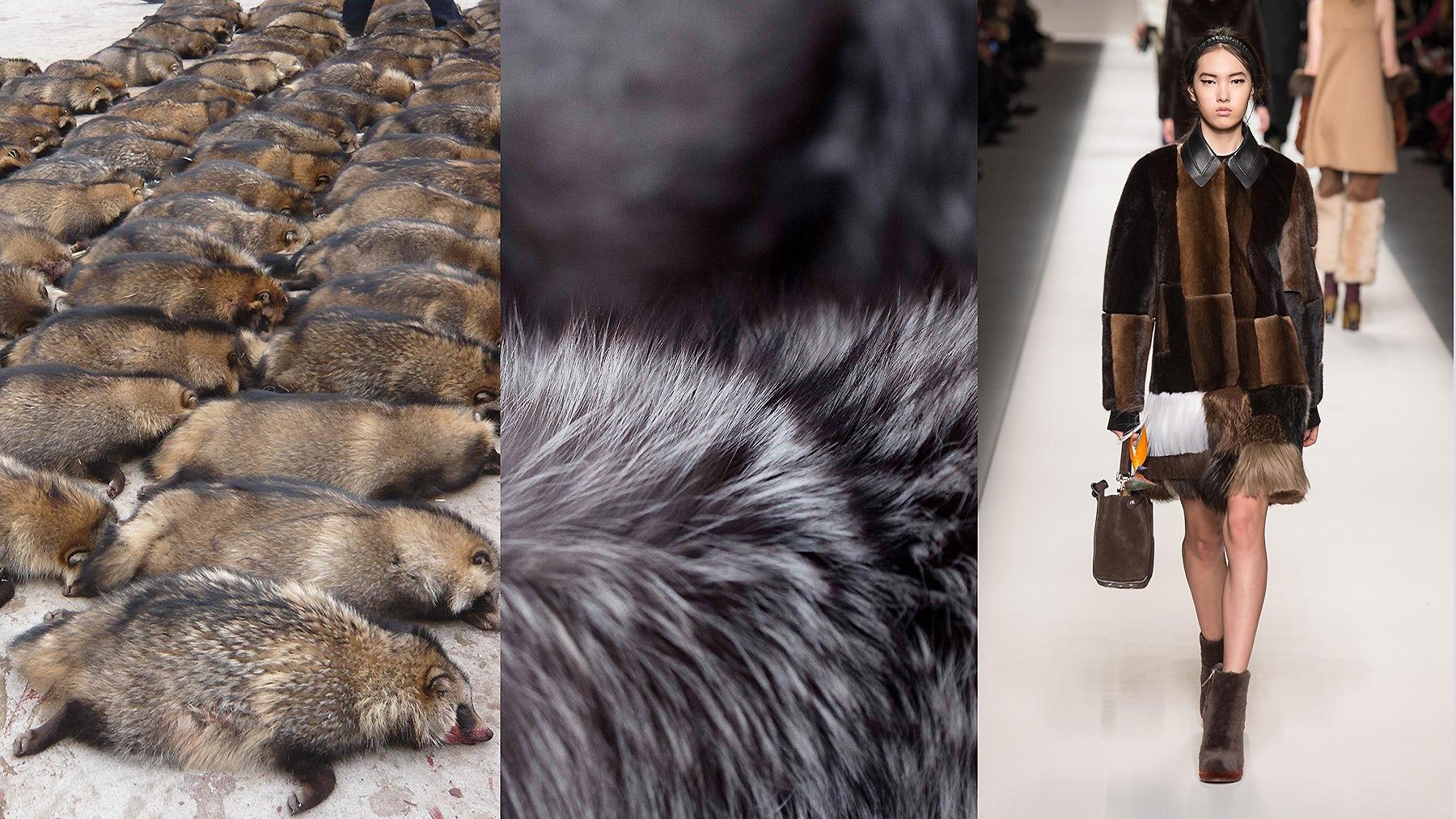 Raccoon dogs at a fur farm, fur, Fendi Autumn/Winter 2015 | Source: PETA, Saga Furs, InDigital