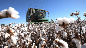Cotton production | Photo: Bloomberg