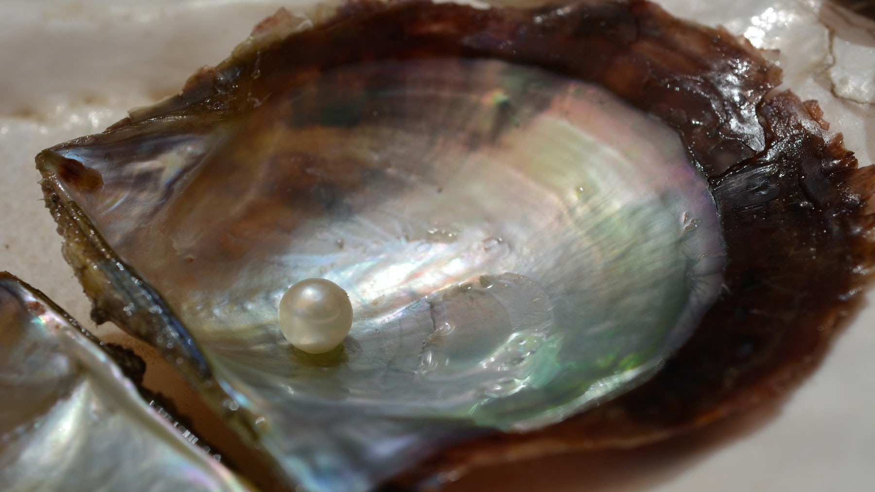 A cultured pearl | Source: Shutterstock