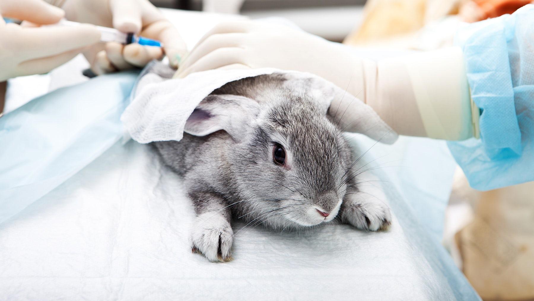 Cosmetics animal testing   Source: Shutterstock