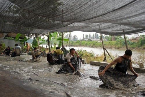 Workers removing the mud from the tea-silk at the end of the dyeing and drying process | Source: Rechenberg