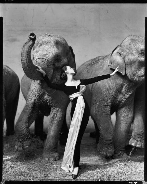 Dovima with Elephants, at Cirque D'Hiver, Paris, August, 1955