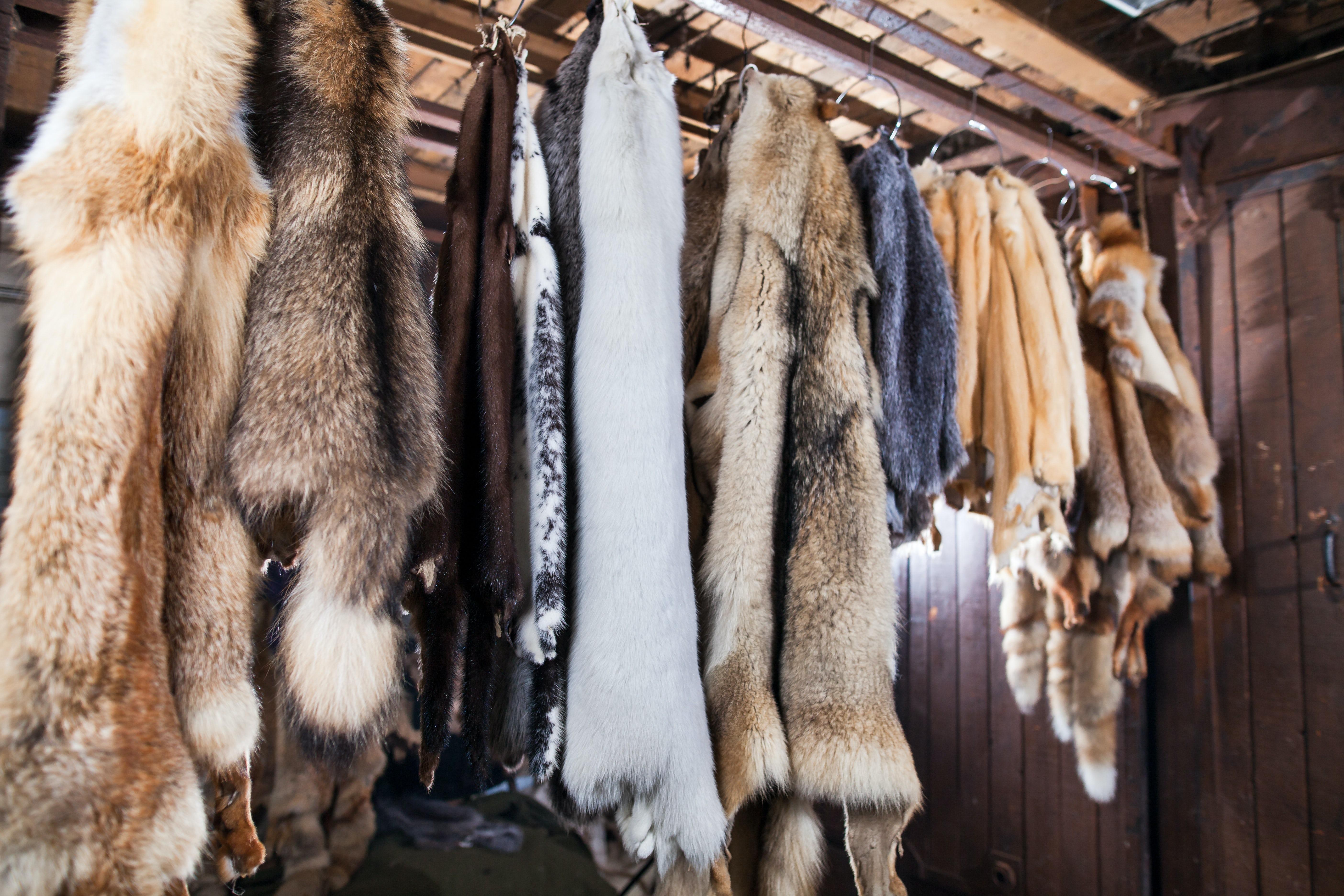 Fur   Source: Shutterstock