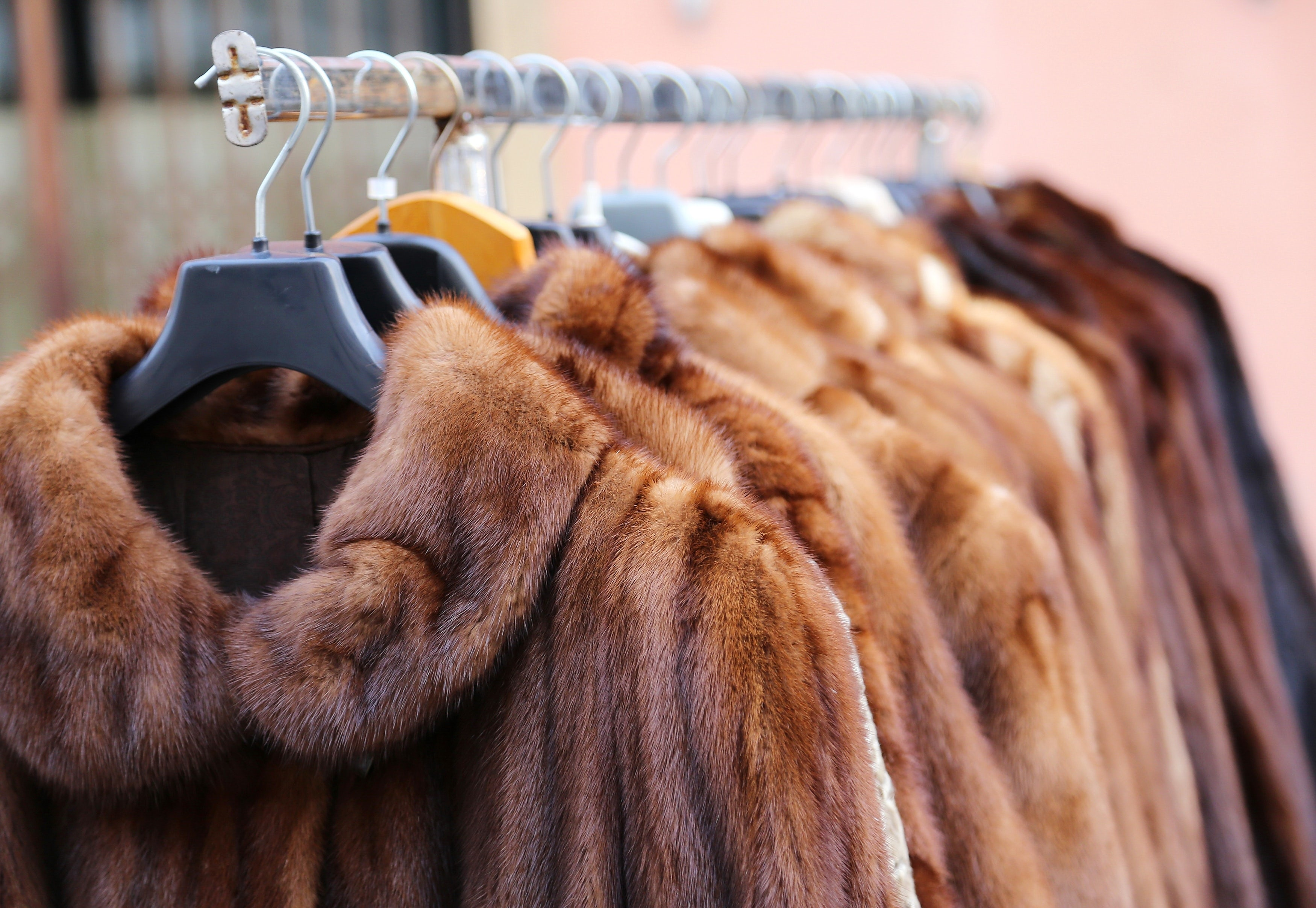 Article cover of Op-Ed | Fashion's Fur-Free Future