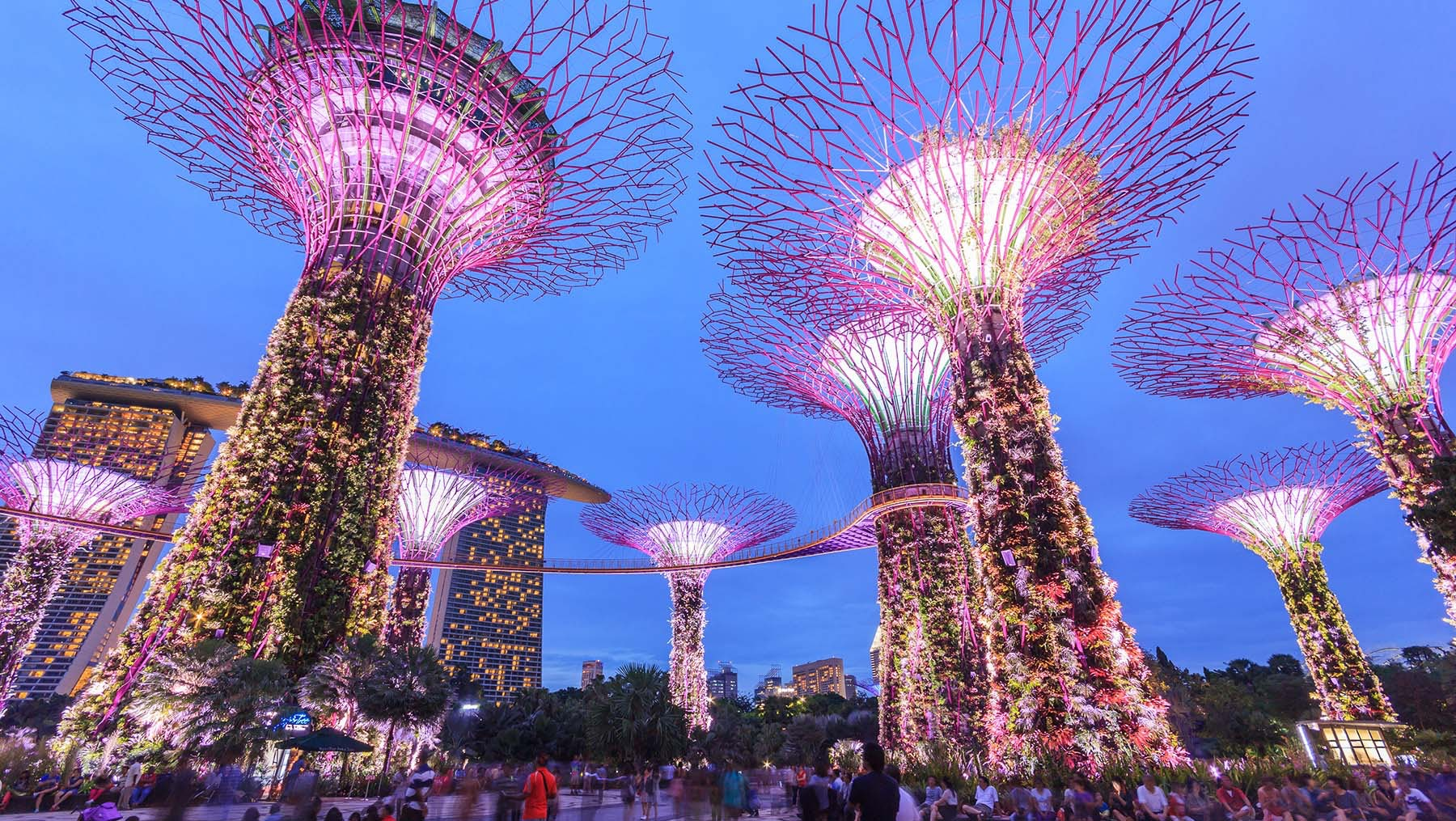 Singapore's Supertree Grove | Source: Shutterstock