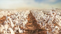 Cotton fields in West Texas | Source: Shutterstock