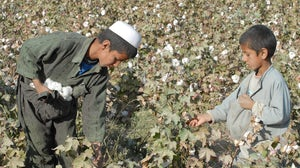 Children picking cotton | Source: Shutterstock