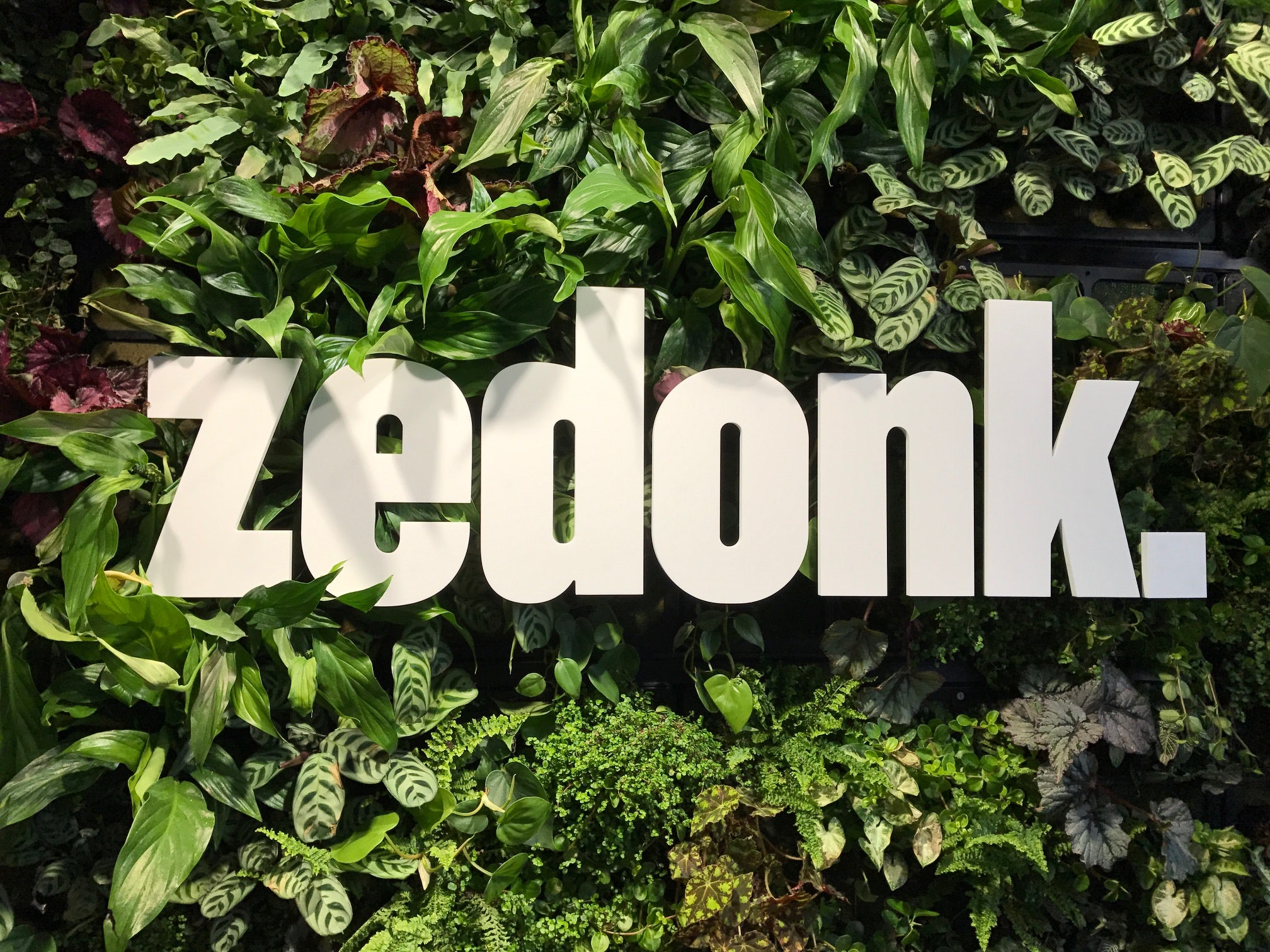 Profile image for Zedonk by F2it